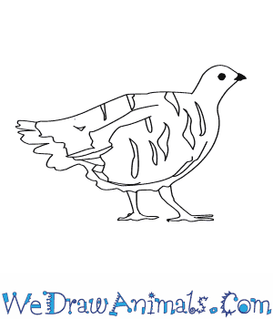 How to Draw a Spruce Grouse in 8 Easy Steps
