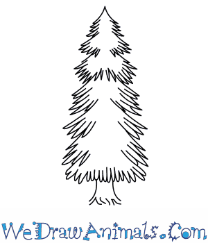 How to Draw a Spruce Tree in 5 Easy Steps