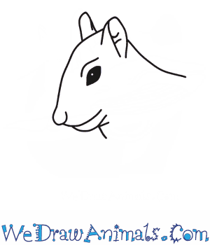 How to Draw a Squirrel Head in 6 Easy Steps