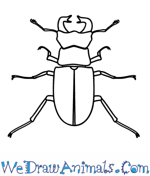 How to Draw a Stag Beetle in 9 Easy Steps