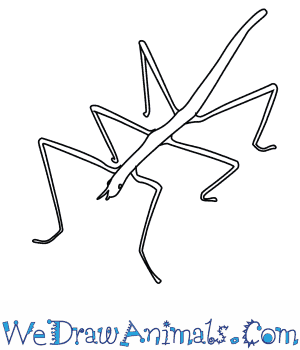 How to Draw a Stick Insect in 5 Easy Steps