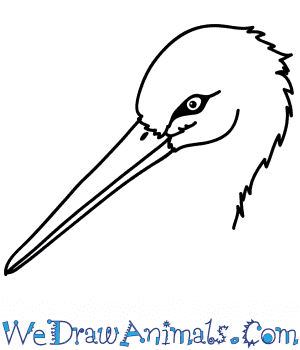 How to Draw a Stork Face in 5 Easy Steps