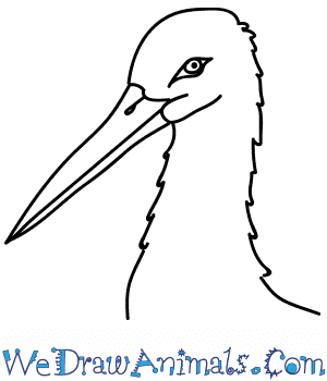 How to Draw a Stork Head in 8 Easy Steps