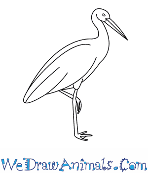 How to Draw a Stork in 9 Easy Steps