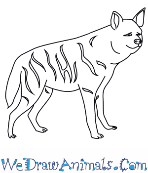 How to Draw a Striped Hyena in 9 Easy Steps