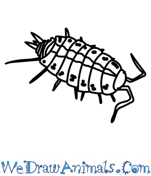 How to Draw a Striped Woodlouse in 6 Easy Steps