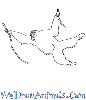 How to Draw a Sumatran Orangutan in 7 Easy Steps