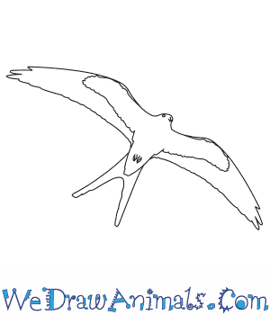 How to Draw a Swallow Tailed Kite in 6 Easy Steps
