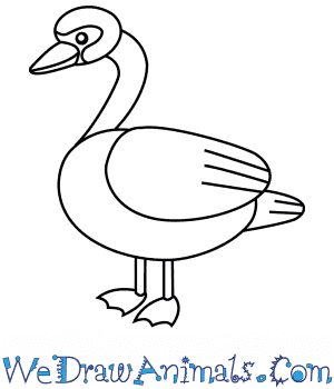 How to Draw a Swan For Kids in 6 Easy Steps