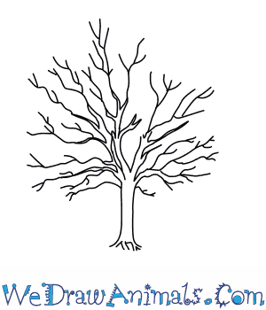 How to Draw a Sycamore Tree in 5 Easy Steps