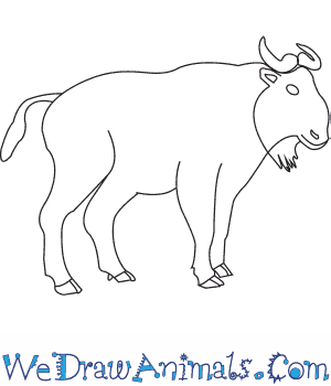 How to Draw a Takin in 7 Easy Steps