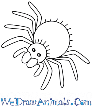 How to Draw a Tarantula For Kids in 6 Easy Steps