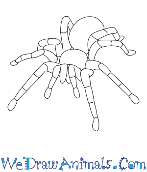 How to Draw a Tarantula in 8 Easy Steps