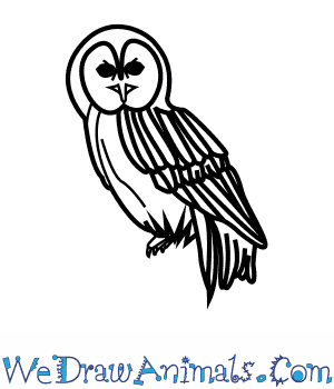 How to Draw a Tawny Owl in 9 Easy Steps