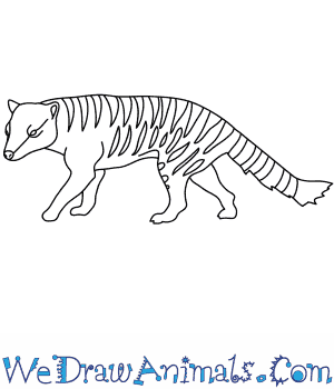 How to Draw a Thylacine in 9 Easy Steps