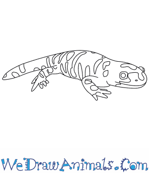 How to Draw a Tiger Salamander in 7 Easy Steps
