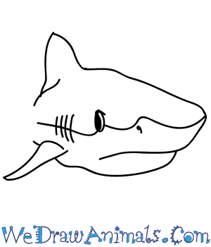 How to Draw a Tiger Shark Head in 9 Easy Steps