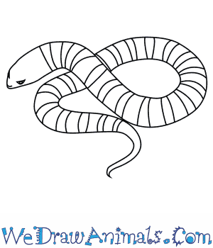 How to Draw a Tiger Snake in 5 Easy Steps