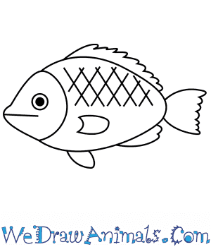 How to Draw a Tilapia For Kids in 5 Easy Steps