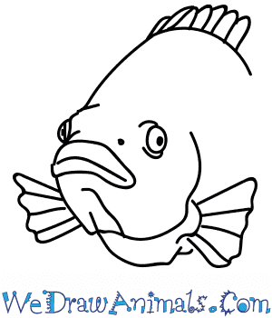 How to Draw a Tilapia Head in 7 Easy Steps