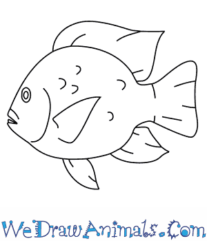 How to Draw a Tilapia in 8 Easy Steps