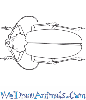How to Draw a Titan Beetle in 6 Easy Steps