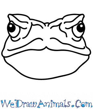 How to Draw a Toad Face in 4 Easy Steps