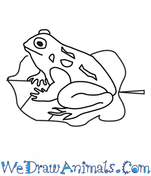 How to Draw a Toad in 8 Easy Steps
