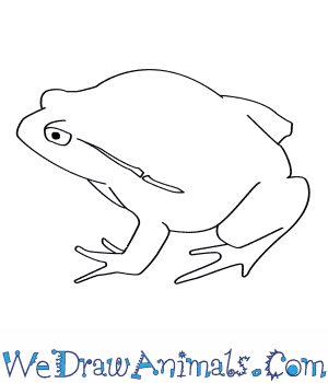 How to Draw a Tomato Frog in 5 Easy Steps