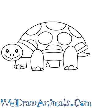 How to Draw a Tortoise For Kids in 6 Easy Steps
