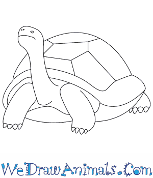 How to Draw a Tortoise in 6 Easy Steps