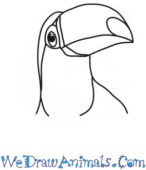 How to Draw a Toucan Head in 6 Easy Steps