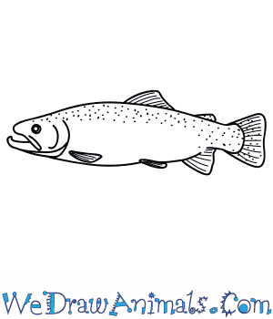 How to Draw a Trout in 8 Easy Steps