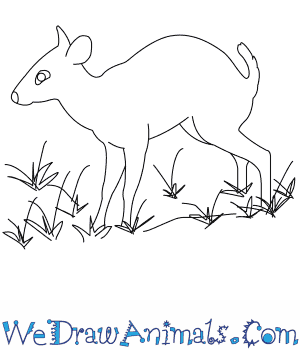 How to Draw a Tufted Deer in 9 Easy Steps