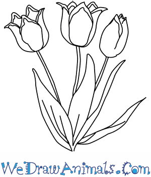 How to draw a tulip flower thecheapjerseys Choice Image