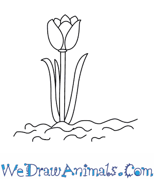 How to Draw a Tulip Tree in 5 Easy Steps