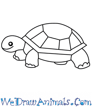 How to Draw a Turtle For Kids in 6 Easy Steps
