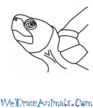 How to Draw a Turtle Head in 6 Easy Steps