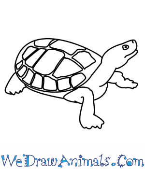 How to Draw a Turtle in 7 Easy Steps