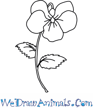 How to Draw a Violet Flower in 4 Easy Steps