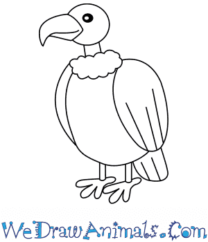How to Draw a Vulture For Kids in 6 Easy Steps
