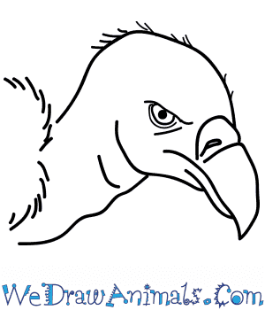 How to Draw a Vulture Head in 6 Easy Steps