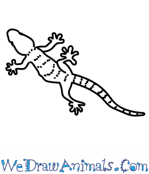 How to Draw a Wall Gecko in 7 Easy Steps