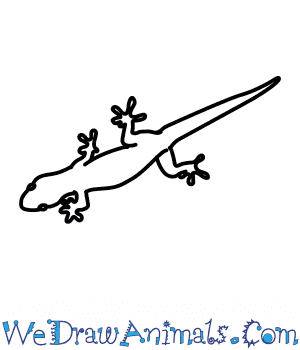 How to Draw a Wall Lizard in 6 Easy Steps