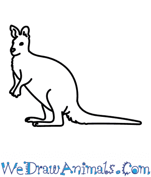 How to Draw a Wallaroo in 7 Easy Steps