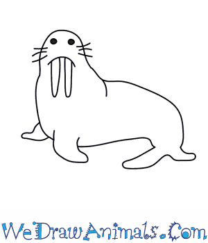 How to Draw a Walrus in 7 Easy Steps