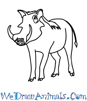 How to Draw a Warthog in 11 Easy Steps