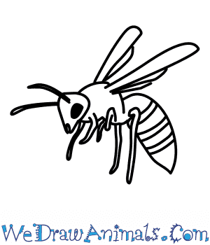How to Draw a Wasp in 7 Easy Steps