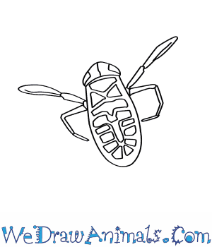 How to Draw a Water Boatman in 7 Easy Steps