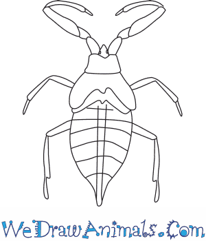 How to Draw a Water Scorpion in 6 Easy Steps